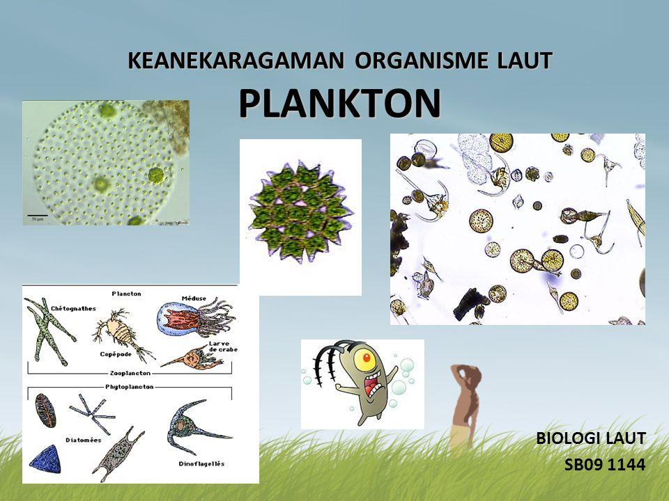 KEANEKARAGAMAN ORGANISME LAUT PLANKTON BIOLOGI LAUT SB09 1144