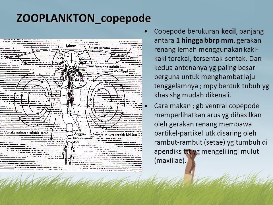 ZOOPLANKTON_copepode •Copepode berukuran kecil, panjang antara 1 hingga bbrp mm, gerakan renang lemah menggunakan kaki- kaki torakal, tersentak-sentak