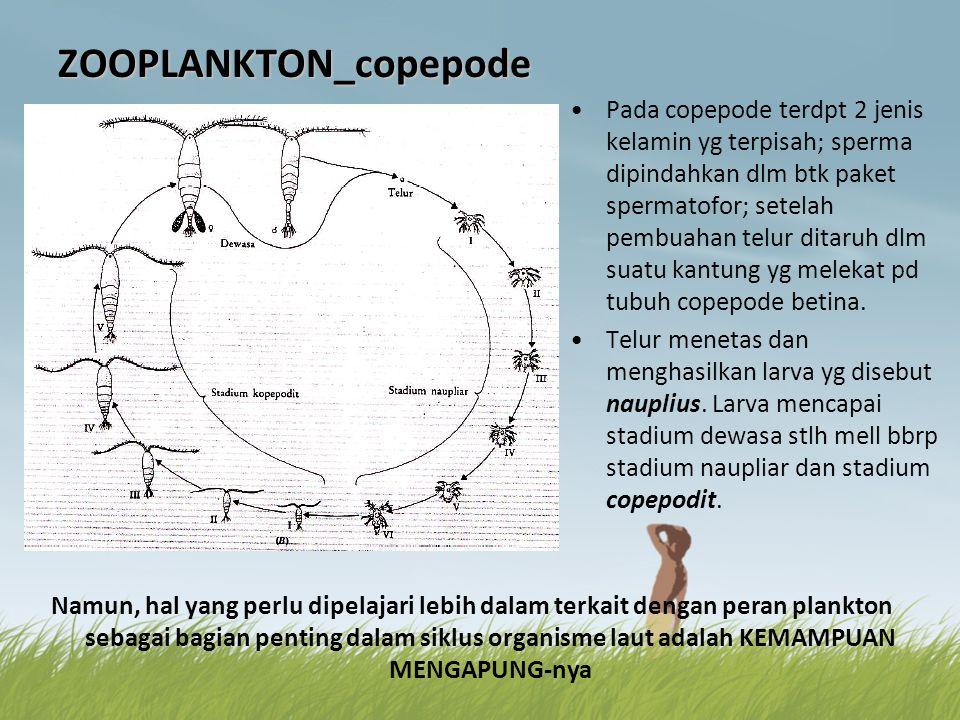 ZOOPLANKTON_copepode •Pada copepode terdpt 2 jenis kelamin yg terpisah; sperma dipindahkan dlm btk paket spermatofor; setelah pembuahan telur ditaruh
