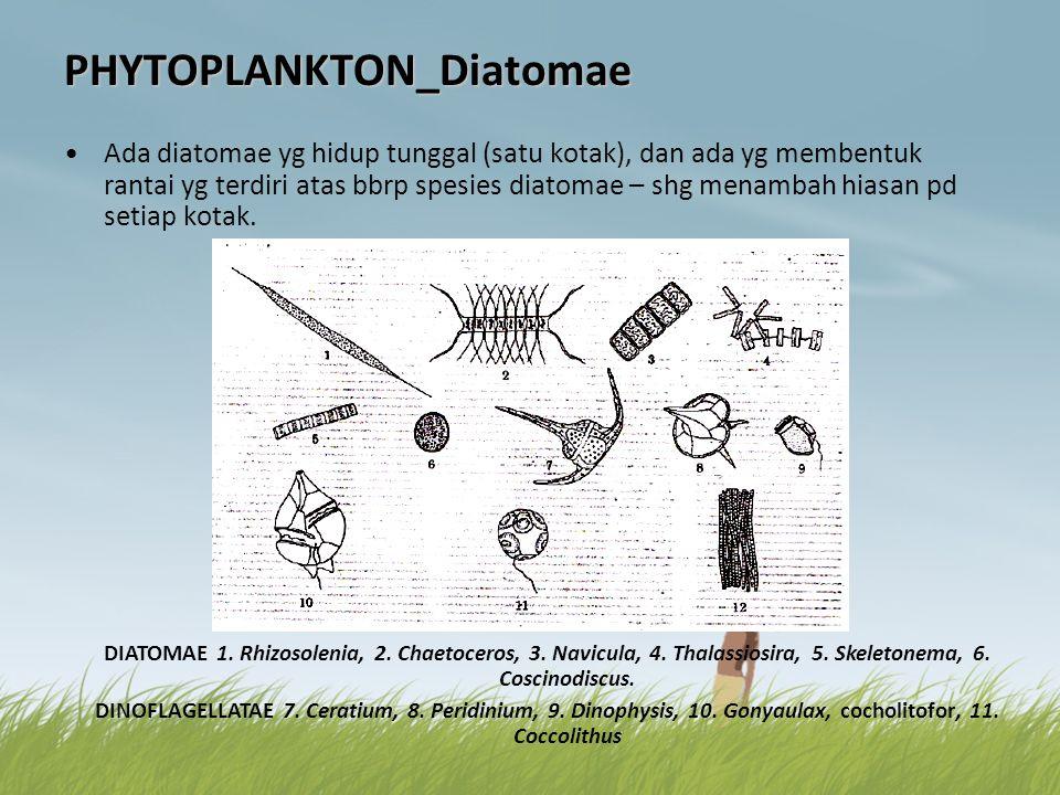 PHYTOPLANKTON_Diatomae •Ada diatomae yg hidup tunggal (satu kotak), dan ada yg membentuk rantai yg terdiri atas bbrp spesies diatomae – shg menambah h