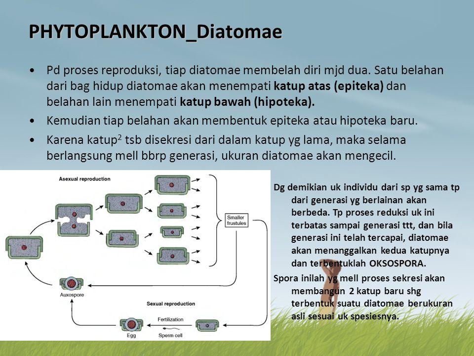 PHYTOPLANKTON_Diatomae •Pd proses reproduksi, tiap diatomae membelah diri mjd dua. Satu belahan dari bag hidup diatomae akan menempati katup atas (epi