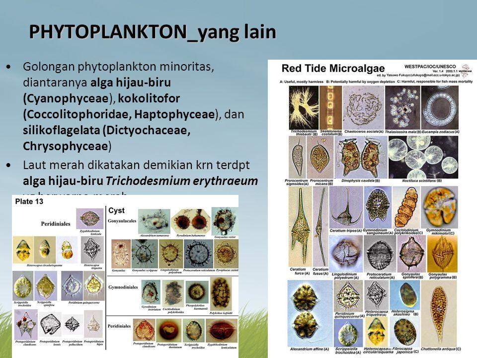 PHYTOPLANKTON_yang lain •Golongan phytoplankton minoritas, diantaranya alga hijau-biru (Cyanophyceae), kokolitofor (Coccolitophoridae, Haptophyceae),