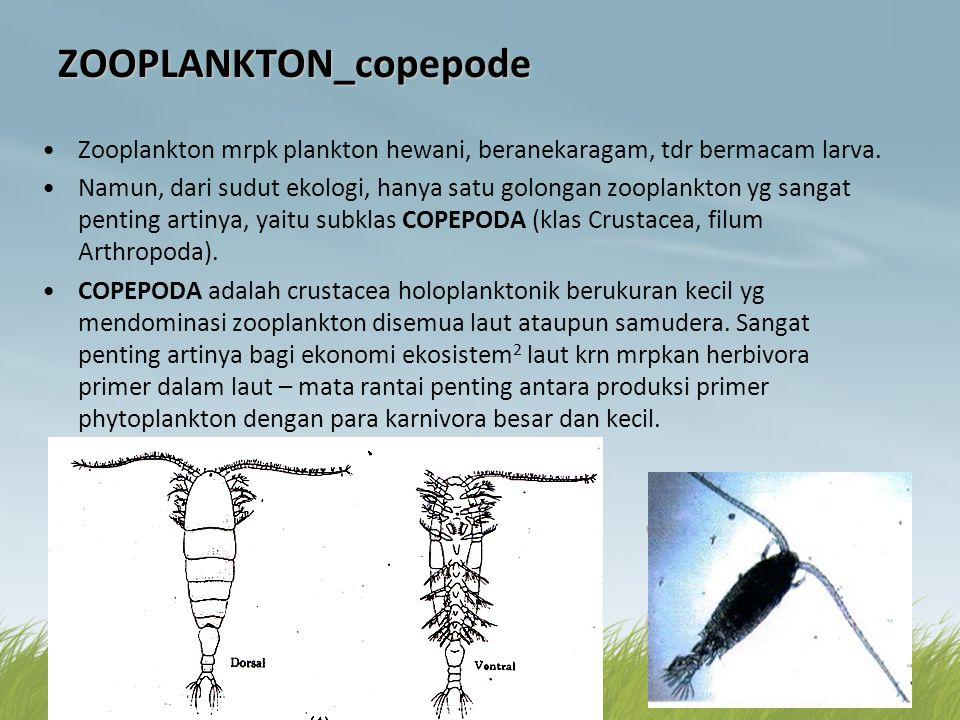 ZOOPLANKTON_copepode •Zooplankton mrpk plankton hewani, beranekaragam, tdr bermacam larva. •Namun, dari sudut ekologi, hanya satu golongan zooplankton