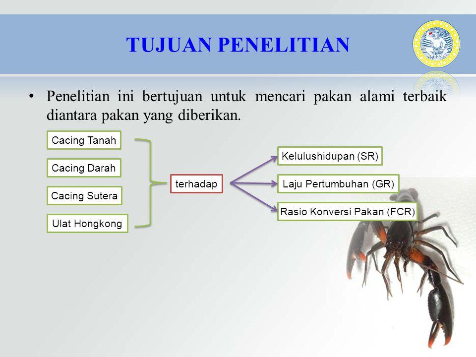 • Penelitian ini bertujuan untuk mencari pakan alami terbaik diantara pakan yang diberikan. Cacing Tanah Cacing Darah Cacing Sutera Ulat Hongkong Kelu