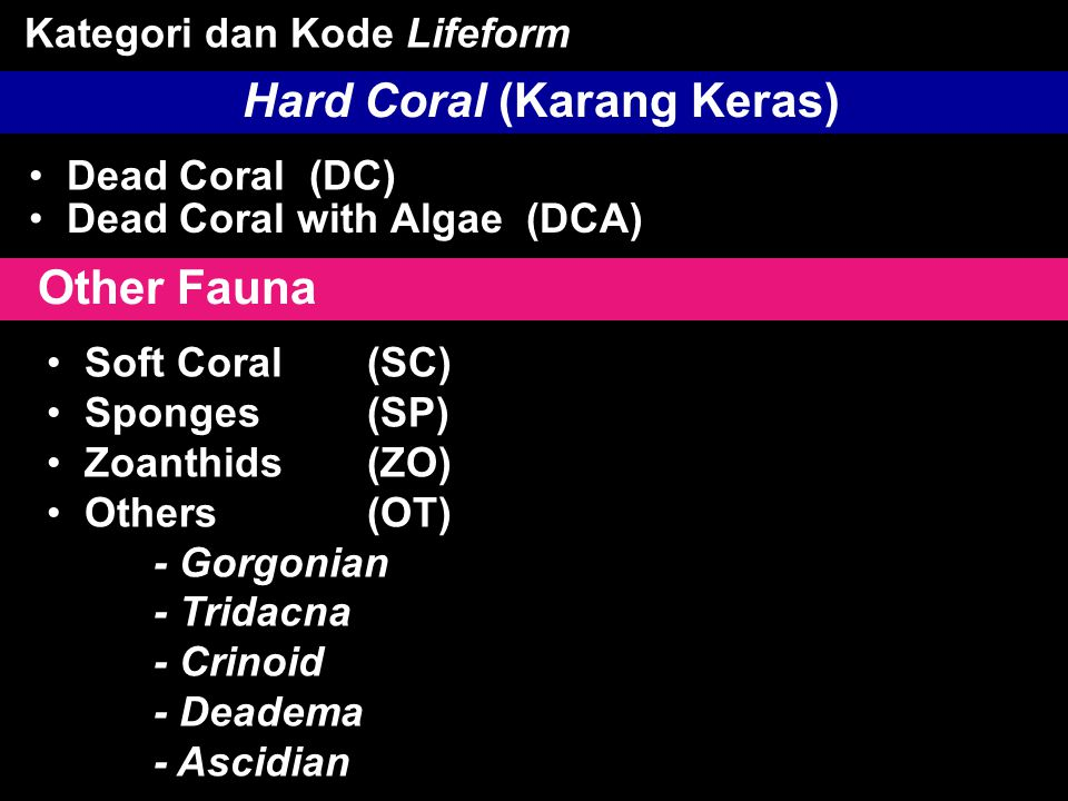 • Dead Coral (DC) Hard Coral (Karang Keras) • Dead Coral with Algae (DCA) Kategori dan Kode Lifeform Other Fauna • Soft Coral(SC) • Sponges(SP) • Zoanthids(ZO) • Others(OT) - Gorgonian - Tridacna - Crinoid - Deadema - Ascidian