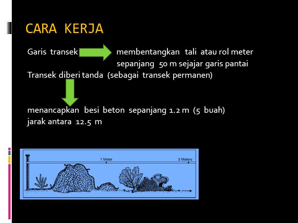 CARA KERJA Garis transek membentangkan tali atau rol meter sepanjang 50 m sejajar garis pantai Transek diberi tanda (sebagai transek permanen) menanca