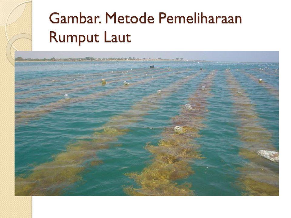 Gambar. Metode Pemeliharaan Rumput Laut