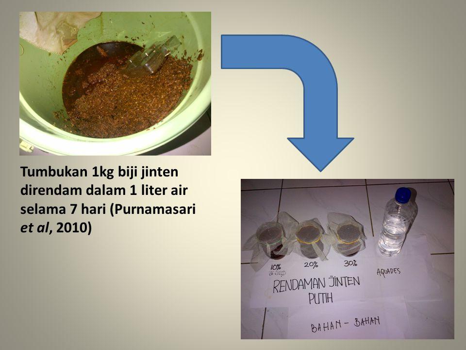 Tumbukan 1kg biji jinten direndam dalam 1 liter air selama 7 hari (Purnamasari et al, 2010)