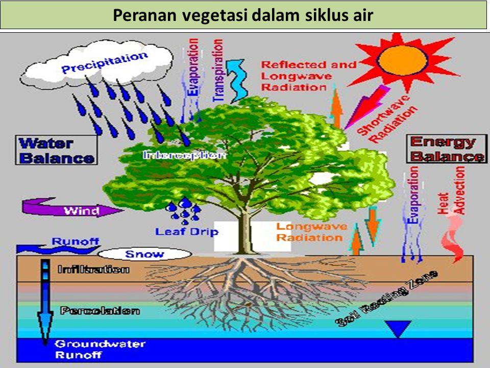 19 Peranan vegetasi dalam siklus air