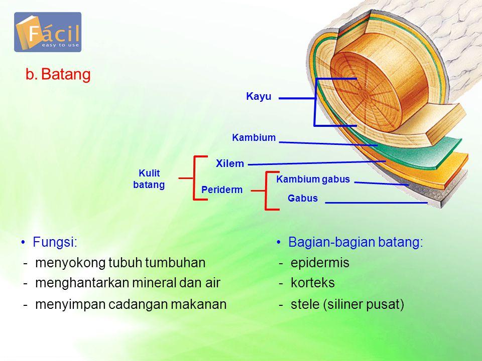 b.Batang Kayu Kambium Kambium gabus Gabus Periderm Xilem Kulit batang •Fungsi: - menyokong tubuh tumbuhan - menghantarkan mineral dan air - menyimpan cadangan makanan •Bagian-bagian batang: - epidermis - korteks - stele (siliner pusat)