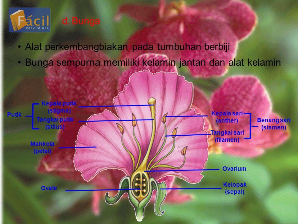 d.Bunga •Alat perkembangbiakan pada tumbuhan berbiji •Bunga sempurna memiliki kelamin jantan dan alat kelamin Kepala putik (stigma) Tangkai putik (sti
