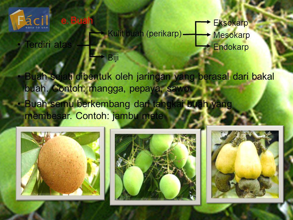 e.Buah •Terdiri atas Kulit buah (perikarp) Biji Eksokarp Mesokarp Endokarp •Buah sejati dibentuk oleh jaringan yang berasal dari bakal buah. Contoh: m