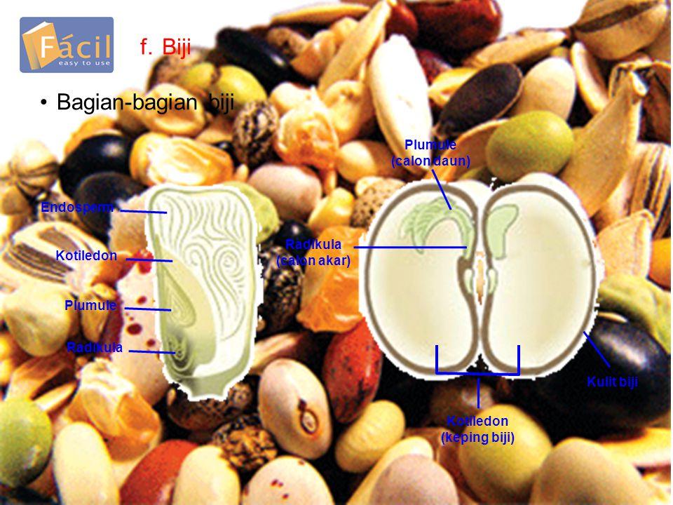 f.Biji •Bagian-bagian biji Endosperm Kotiledon Plumule Radikula Plumule (calon daun) Radikula (calon akar) Kotiledon (keping biji) Kulit biji