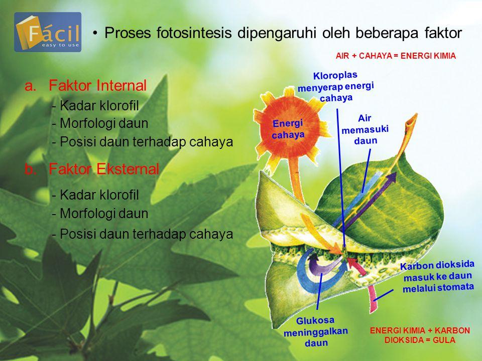 •Proses fotosintesis dipengaruhi oleh beberapa faktor a.Faktor Internal - Kadar klorofil - Morfologi daun - Posisi daun terhadap cahaya b.Faktor Ekste