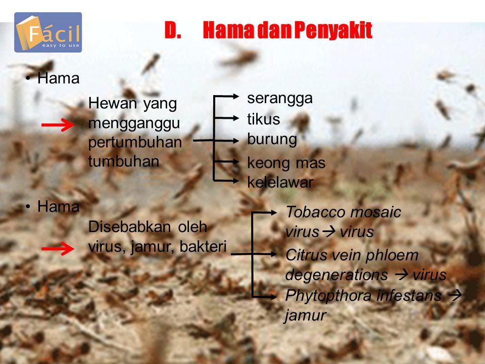 D.Hama dan Penyakit •Hama Hewan yang mengganggu pertumbuhan tumbuhan serangga tikus burung keong mas kelelawar Tobacco mosaic virus  virus •Hama Dise