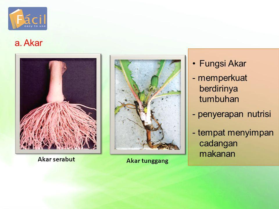 a.Akar Akar serabut Akar tunggang •Fungsi Akar - memperkuat berdirinya tumbuhan - penyerapan nutrisi - tempat menyimpan cadangan makanan