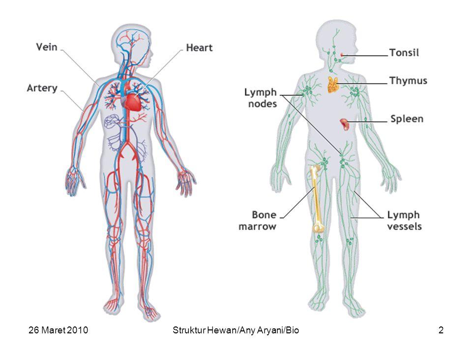26 Maret 2010Struktur Hewan/Any Aryani/Bio13 Ventrikel Vena Pulmonalis Foramen Panizzae AORTA LEFT ATRIUM RIGHT ATRIUM VENTRICLES RIGHT ARCH LEFT ARCH