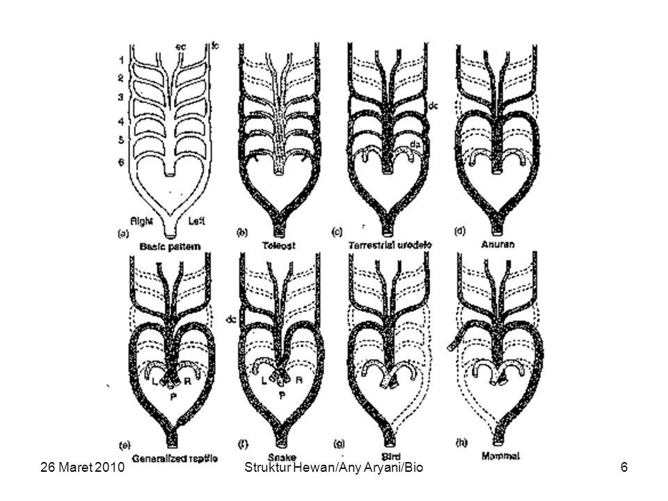 26 Maret 2010Struktur Hewan/Any Aryani/Bio6