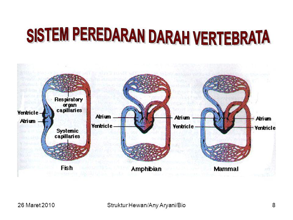26 Maret 2010Struktur Hewan/Any Aryani/Bio9 VENA BESAR KELEP SINOATRIAL KELEP ATRIOVENTRIKULAR KELEP SEMILUNAR