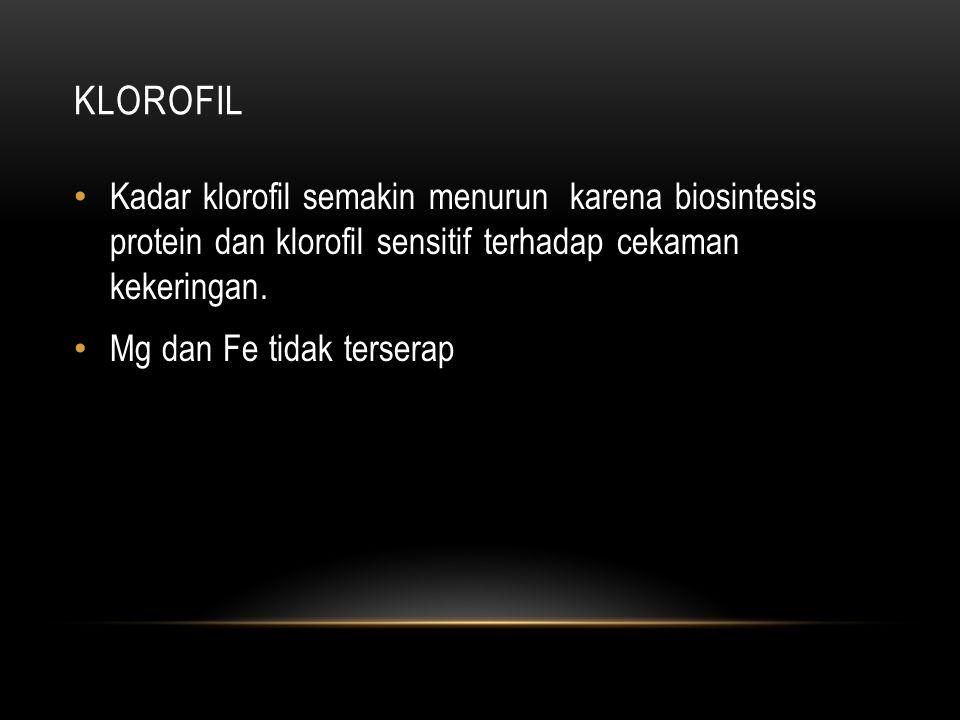 KLOROFIL • Kadar klorofil semakin menurun karena biosintesis protein dan klorofil sensitif terhadap cekaman kekeringan. • Mg dan Fe tidak terserap