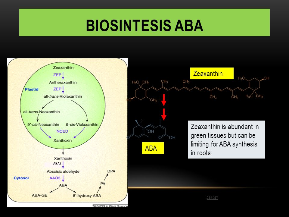 BIOSINTESIS ABA Reprinted from Nambara, E., and Marion-Pol, A. (2003) ABA action and interactions in seeds. Trends Plant Sci. 8: 213-217 with permissi