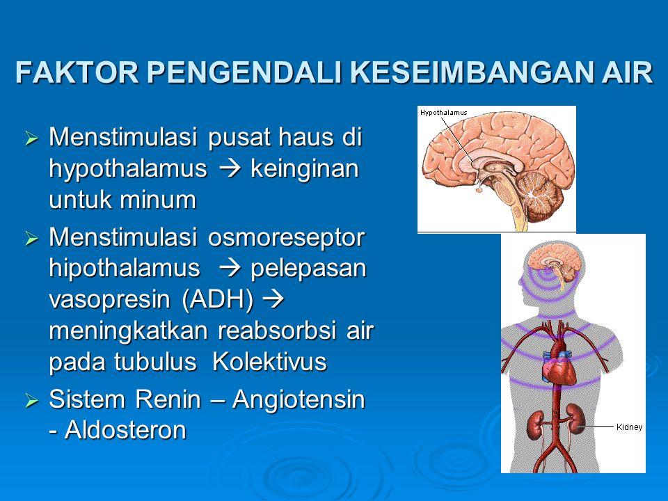 FAKTOR PENGENDALI KESEIMBANGAN AIR  Menstimulasi pusat haus di hypothalamus  keinginan untuk minum  Menstimulasi osmoreseptor hipothalamus  pelepasan vasopresin (ADH)  meningkatkan reabsorbsi air pada tubulus Kolektivus  Sistem Renin – Angiotensin - Aldosteron