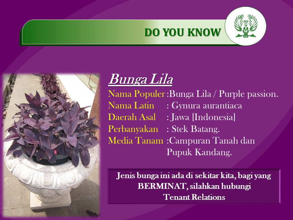 .…………… DO YOU KNOW …………… Bunga Lila Nama Populer:Bunga Lila / Purple passion.