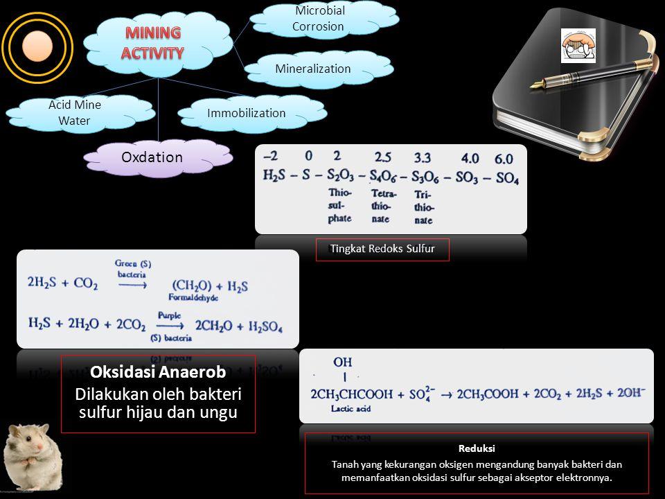 Oxdation Immobilization Mineralization Microbial Corrosion Microbial Corrosion Acid Mine Water Acid Mine Water Di dalam lingkungan, mineral sulfat, su