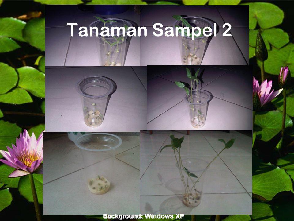 Background:rochmatsukabis.word press.com Tanaman Sampel 2 Background: Windows XP