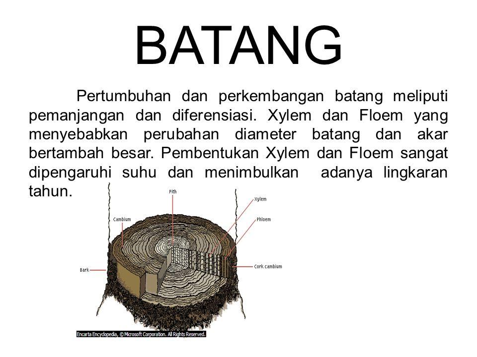BATANG Pertumbuhan dan perkembangan batang meliputi pemanjangan dan diferensiasi. Xylem dan Floem yang menyebabkan perubahan diameter batang dan akar
