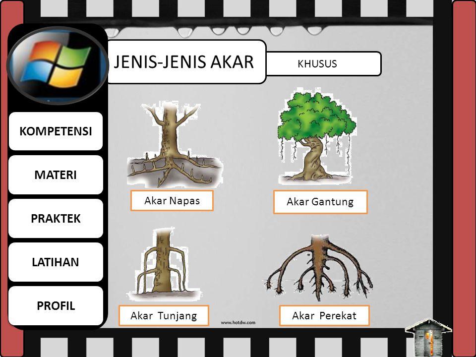 TUNGGANG JENIS-JENIS AKAR Adapun akar tunggang biasanya dimiliki oleh tumbuhan jenis dikotil (biji berkeping dua).Misalnya, mangga, jambu, jeruk, dan