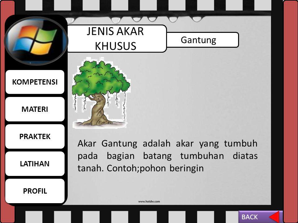 Napas JENIS AKAR KHUSUS Akar Napas adalah akar yang tumbuh tegak lurus ke atas sehingga muncul dari permukaan tanah dan air. Contoh; pohon kayu api. M