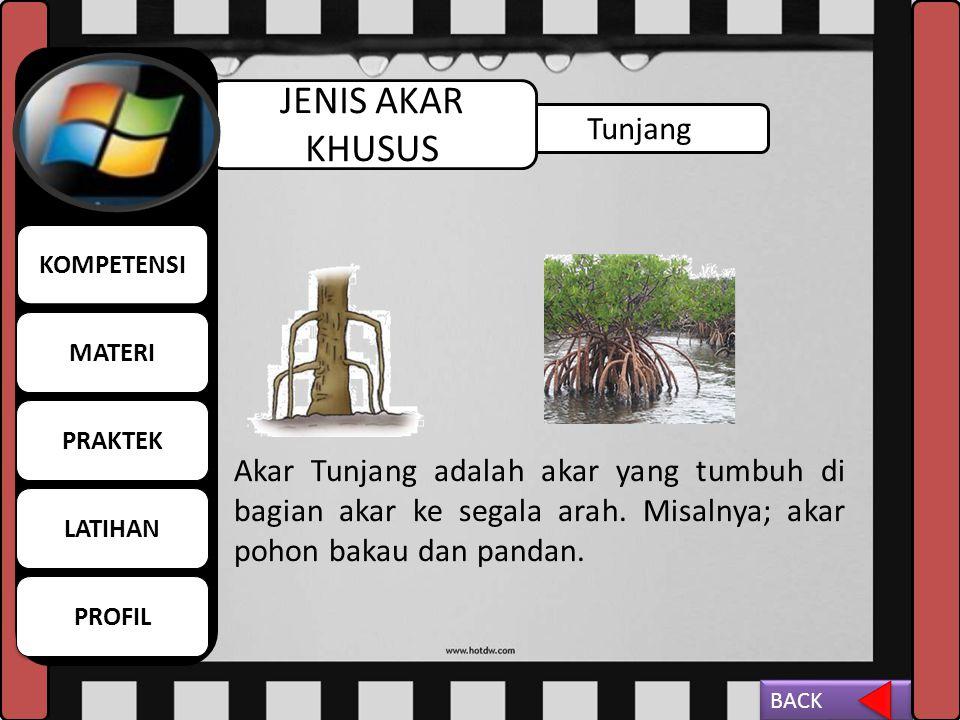 Gantung JENIS AKAR KHUSUS Akar Gantung adalah akar yang tumbuh pada bagian batang tumbuhan diatas tanah. Contoh;pohon beringin BACK MATERI KOMPETENSI