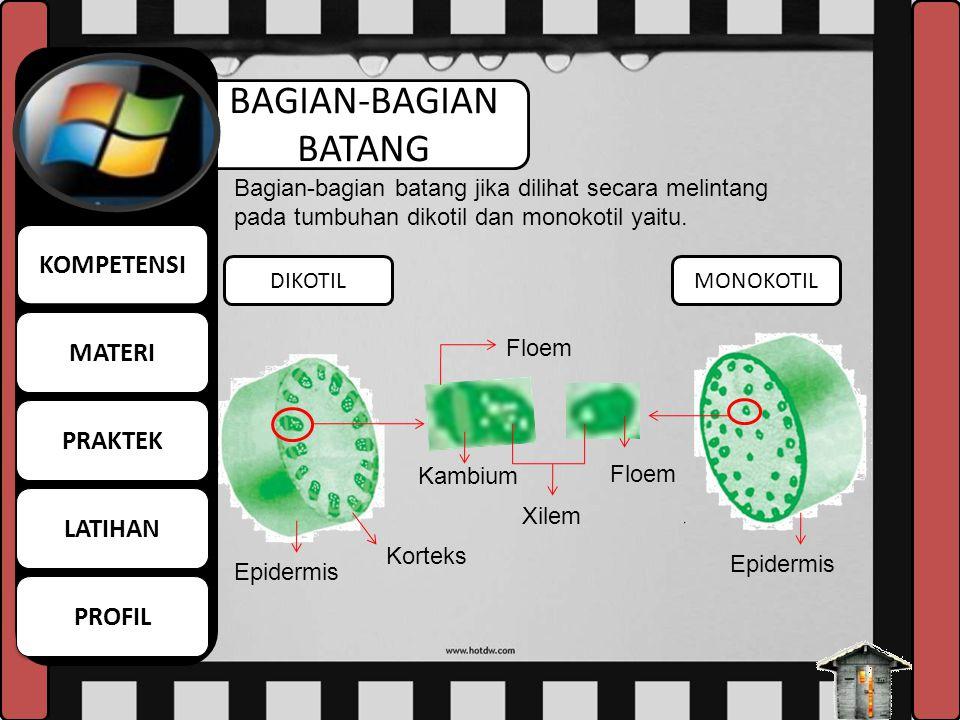 DEFINISI BATANG Batang dapat diumpakan sebagai sumbu tumbuhan. Bagian ini umumnya tumbuh di atas tanah. Arah tumbuh batang menuju sinar matahari BATAN