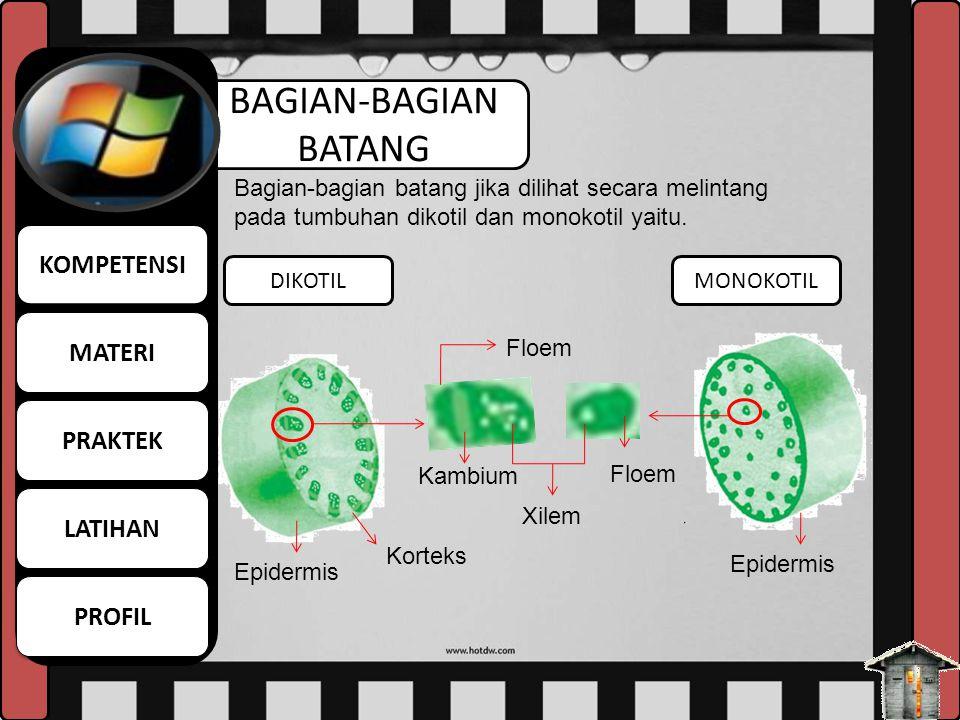 BAGIAN-BAGIAN BATANG DIKOTILMONOKOTIL Bagian-bagian batang jika dilihat secara melintang pada tumbuhan dikotil dan monokotil yaitu. Floem Kambium Floe
