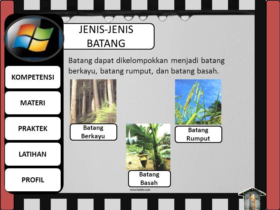 JENIS-JENIS BATANG Batang dapat dikelompokkan menjadi batang berkayu, batang rumput, dan batang basah. Batang Berkayu Batang Rumput Batang Basah MATER