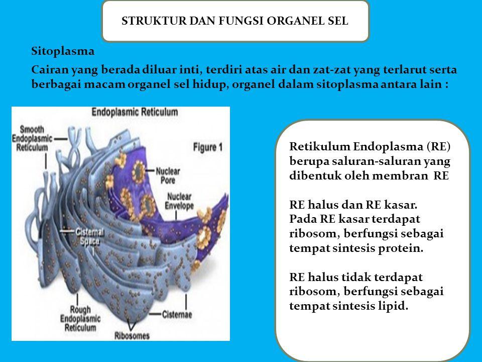 STRUKTUR DAN FUNGSI ORGANEL SEL Retikulum Endoplasma (RE) berupa saluran-saluran yang dibentuk oleh membran RE RE halus dan RE kasar. Pada RE kasar te
