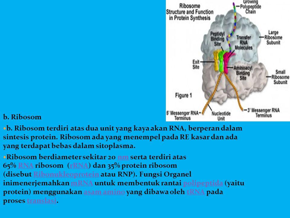 b. Ribosom  b. Ribosom terdiri atas dua unit yang kaya akan RNA, berperan dalam sintesis protein. Ribosom ada yang menempel pada RE kasar dan ada yan