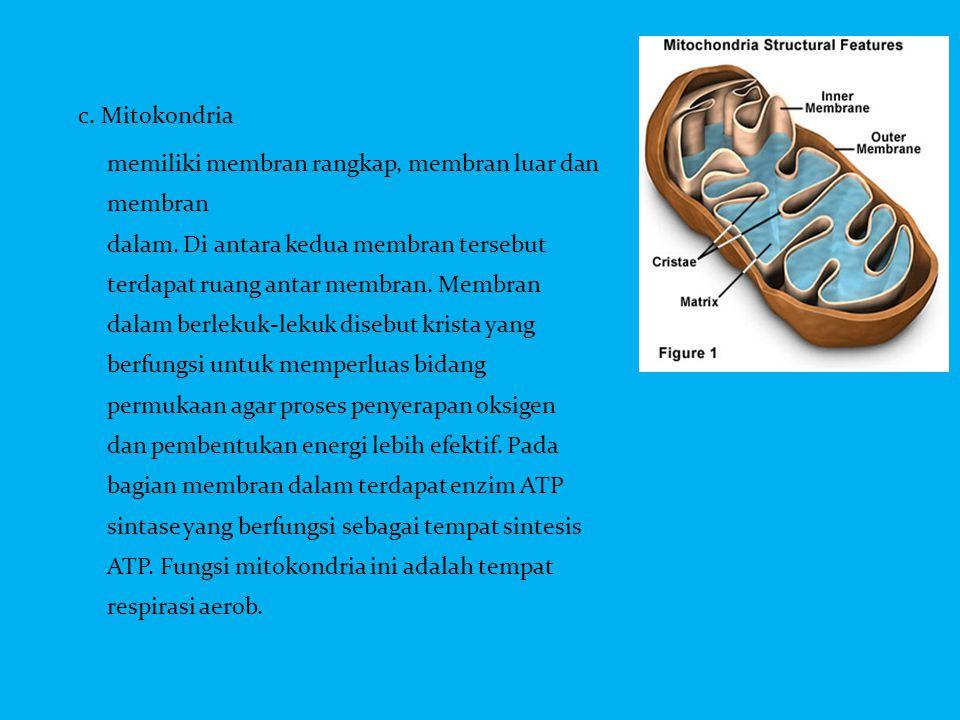 c. Mitokondria memiliki membran rangkap, membran luar dan membran dalam. Di antara kedua membran tersebut terdapat ruang antar membran. Membran dalam