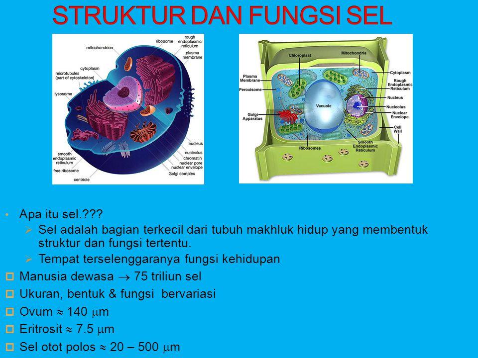 • Apa itu sel.???  Sel adalah bagian terkecil dari tubuh makhluk hidup yang membentuk struktur dan fungsi tertentu.  Tempat terselenggaranya fungsi