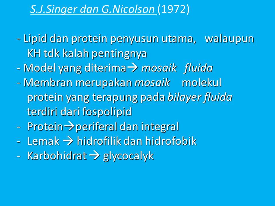 S.J.Singer dan G.Nicolson (1972) - Lipid dan protein penyusun utama, walaupun KH tdk kalah pentingnya - Model yang diterima  mosaik fluida - Membran