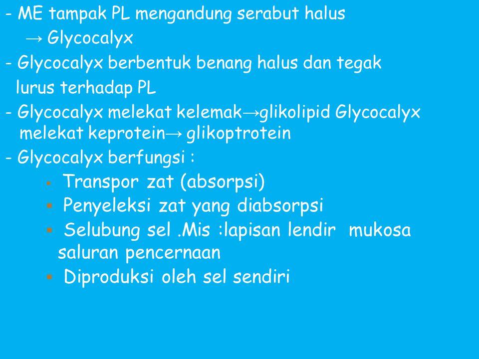 - ME tampak PL mengandung serabut halus → Glycocalyx - Glycocalyx berbentuk benang halus dan tegak lurus terhadap PL - Glycocalyx melekat kelemak → gl