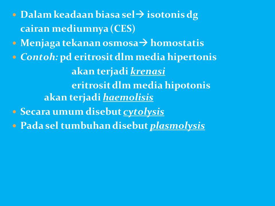  Dalam keadaan biasa sel  isotonis dg cairan mediumnya (CES)  Menjaga tekanan osmosa  homostatis  Contoh: pd eritrosit dlm media hipertonis akan
