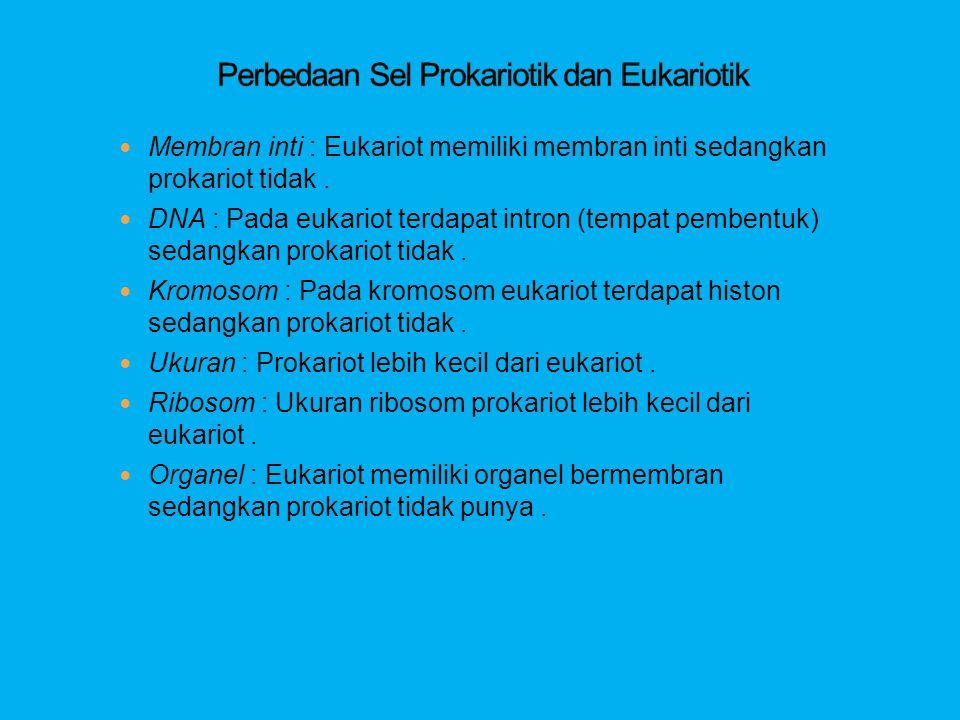  Membran inti : Eukariot memiliki membran inti sedangkan prokariot tidak.  DNA : Pada eukariot terdapat intron (tempat pembentuk) sedangkan prokario