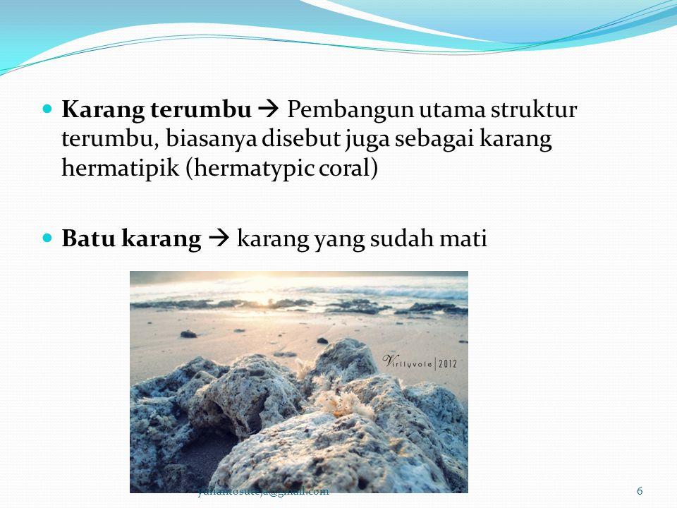  Karang terumbu  Pembangun utama struktur terumbu, biasanya disebut juga sebagai karang hermatipik (hermatypic coral)  Batu karang  karang yang su