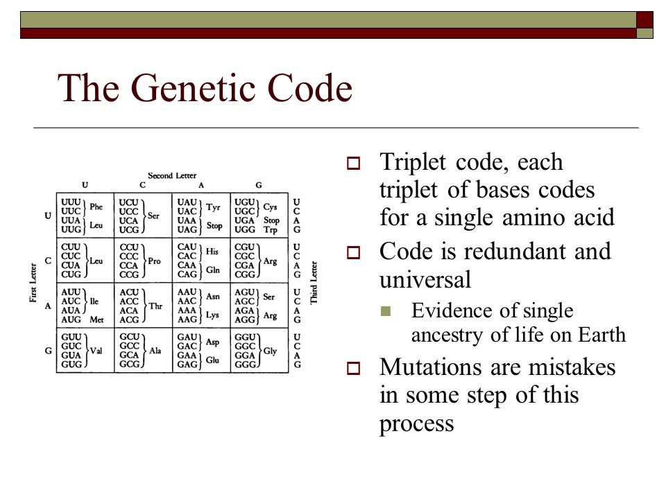 The Genetic Code  Triplet code, each triplet of bases codes for a single amino acid  Code is redundant and universal  Evidence of single ancestry o