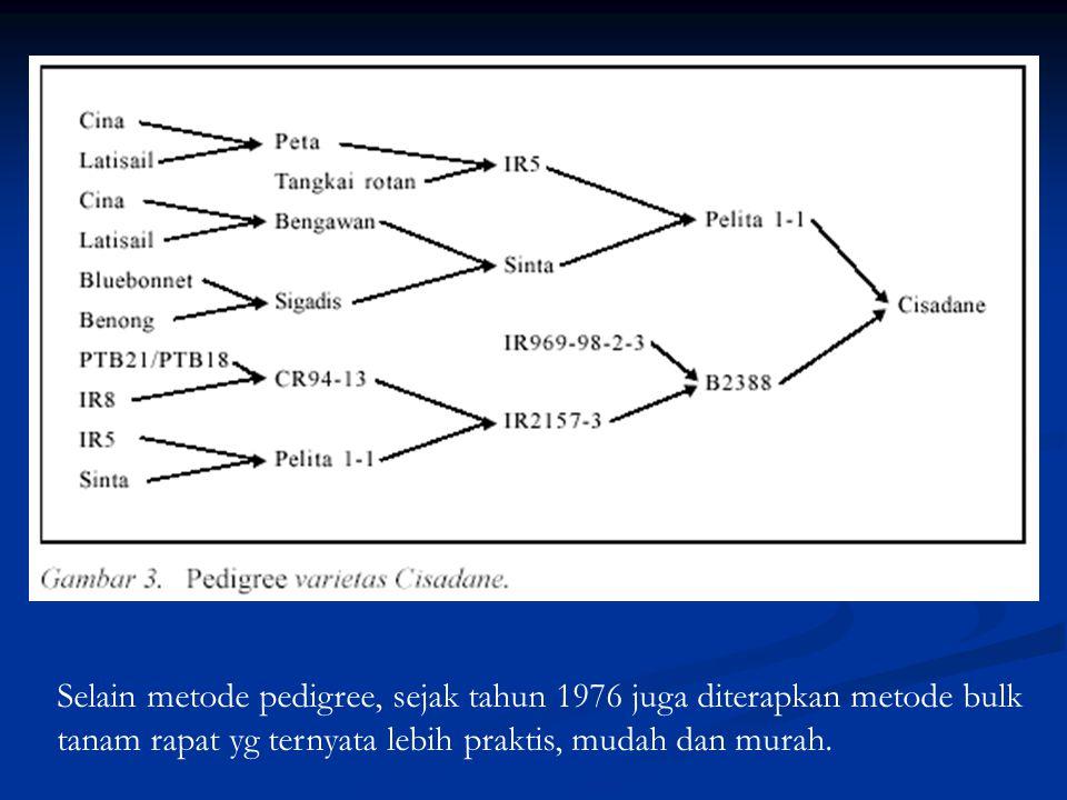 Selain metode pedigree, sejak tahun 1976 juga diterapkan metode bulk tanam rapat yg ternyata lebih praktis, mudah dan murah.