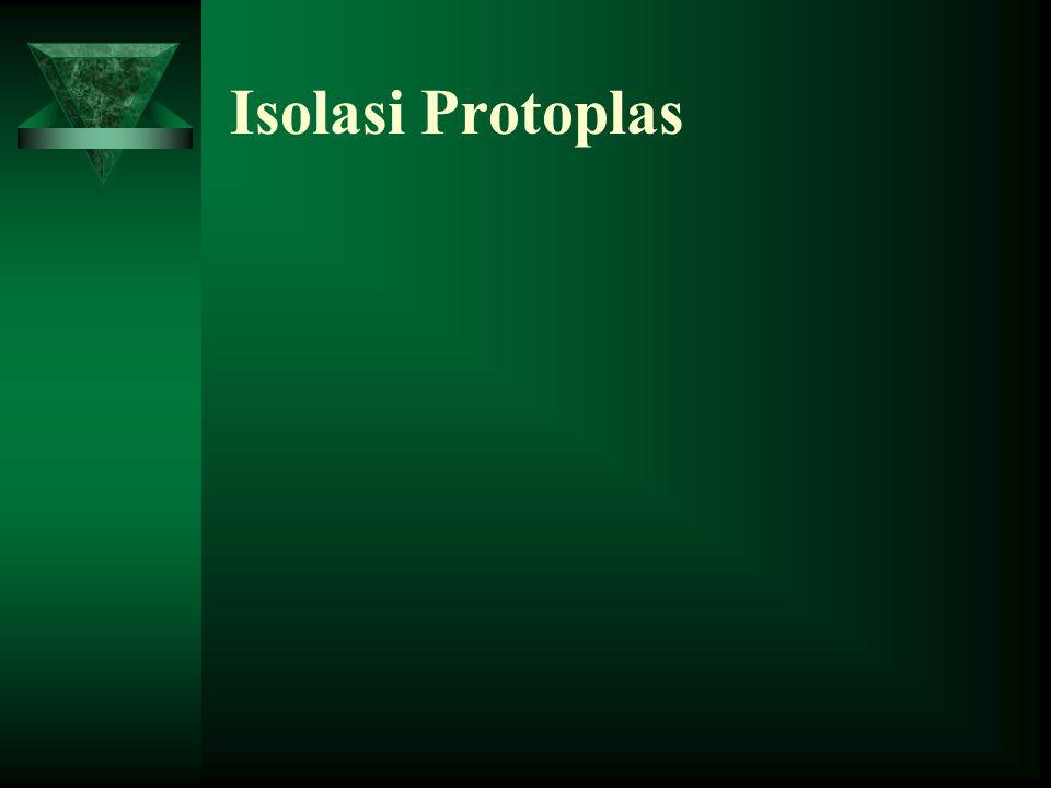 Protoplas adalah sel hidup yang telah dihilangkan dinding selnya, yang disebut sebagai sel telanjang. Dinding sel yang pertama ( dinding primitif atau