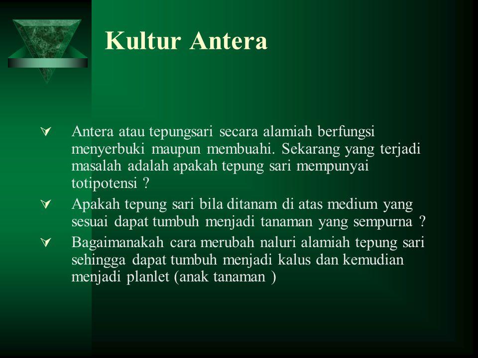 Kultur Antera  Antera atau tepungsari secara alamiah berfungsi menyerbuki maupun membuahi.