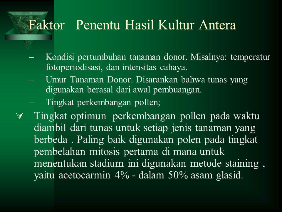Faktor Penentu Hasil Kultur Antera –Kondisi pertumbuhan tanaman donor.